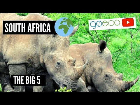 Big Cat, Elephant, and Rhino Conservation in South Africa