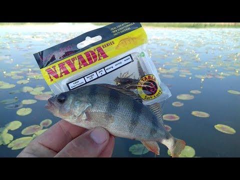 база рыболовная окуневая