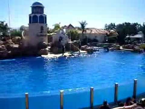 san-diego-sea-world-dolphins-jumping.html
