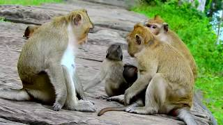 My God! Nearly Die,Two Big Monkeys Bite Little Baby Patty Very Hard| So Poor, Pity Baby Cry  Loudly