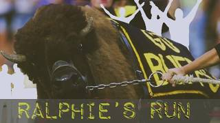 The Story Behind Colorado's Exhilarating Ralphie's Run Traditions Sports Illustrated