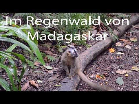 2 Camper im Regenwald von Madagaskar (Masoala Nationalpark)