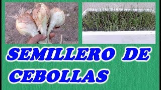 Como Hacer Un Semillero De Cebollas // How To Make a seedbed of onions