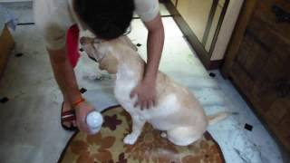 Natural treatment against Ticks and Fleas on dogs and cats