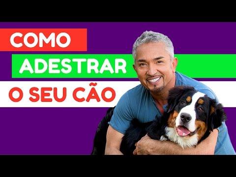 Como adestrar o seu cachorro (Cesar Millan: O Encantador de Cães)
