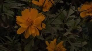আমার পরান যাহা চায় তুমি  তাই, তুমি তাই গো  ~ হেমন্ত মুখোপাধ্যায়