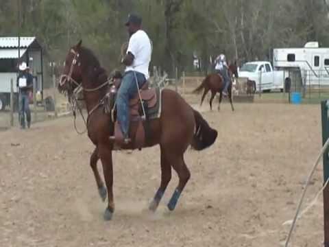 Calf Roping Horse Calf Roping at Tk's Houston