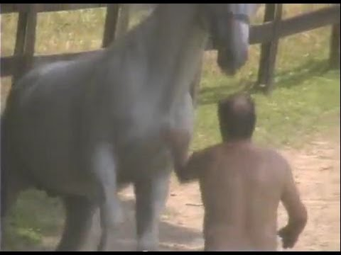 Breeding Horse kicks fat man trying to BREED HIM!