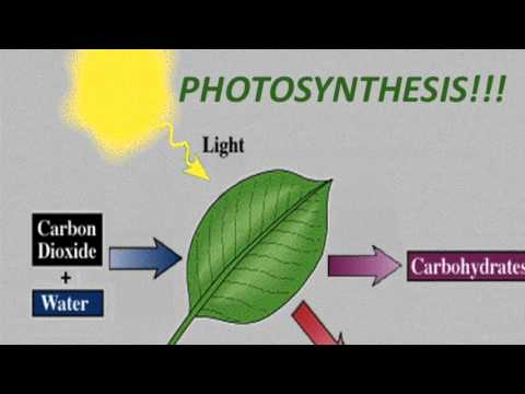 photosynthesis rap Learn about energy and photosynthesis with flocabulary's educational rap song and lesson plan.