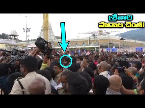 Pawan Kalyan Visits Tirumala Temple Video | Pawan Receives Grand Welcome | Janasena Fans Hunagama
