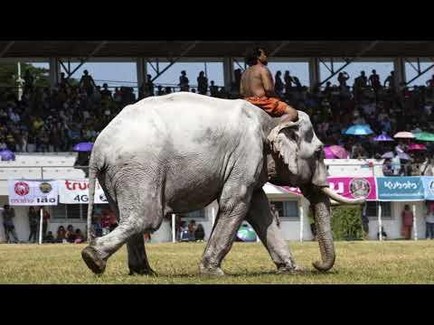 SWR 20.7.802: Der Kalif von Bagdad verschenkt einen Elefanten