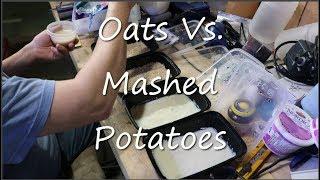Microworm Culturing - Oats Vs Potatoes