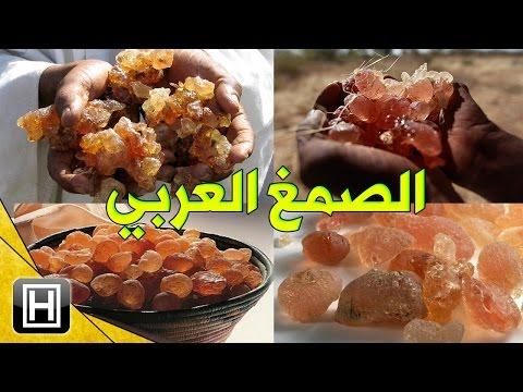 فوائد الصمغ العربي العجيبة وستخداماته المختلفة في علاج الأمراض thumbnail