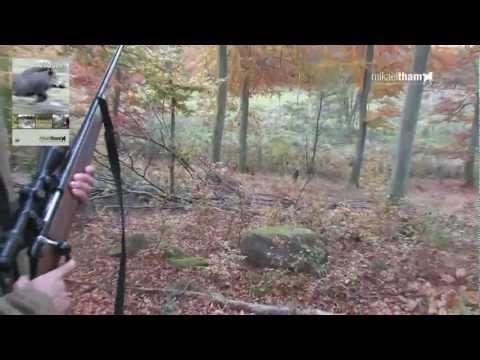 Vildsvin och Kronvilt - Wildboar & Red Deer Hunting