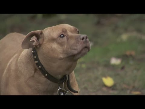 Mentally Ill Man Allegedly Rapes Pit Bull video