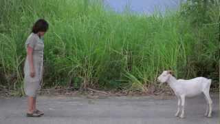 Asan si Lolo Mê? (Trailer)