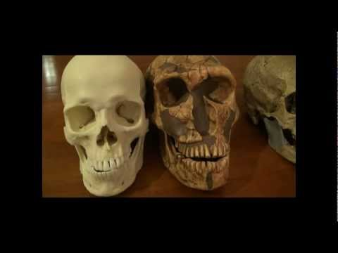Neanderthal/Human Skull Comparison and Neanderthal Documentary