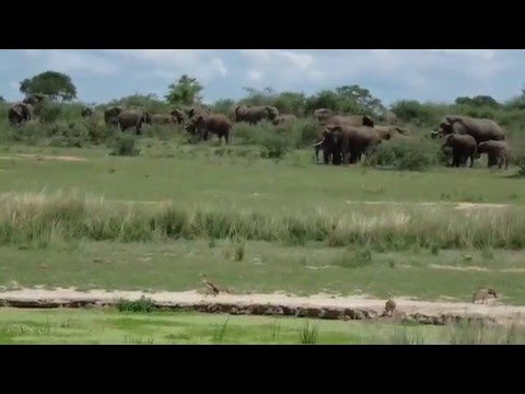 Exciting Safari Murchison Falls National Park Uganda's largest conservation Area