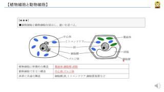 植物細胞と動物細胞