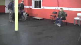 Solid K9 Training Stories - Jo Ann