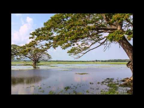 Hotel Ranweli Holiday Village In Waikkal (sri Lanka Westkueste - Sri Lanka) Bewertung Und video