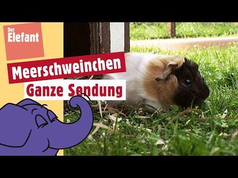 Die Sendung mit dem Elefanten - Hase und Co. | WDR