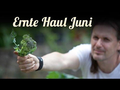 Sommer | Ernte Haul Im Juni | SELBSTVERSORGUNG