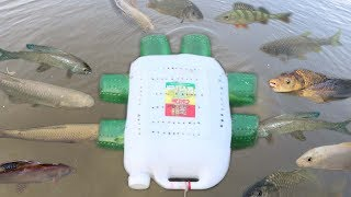 Amazing!! Smart Girl Make Fish Trap Using Plastic Bottle To Catch A Lot of Fish