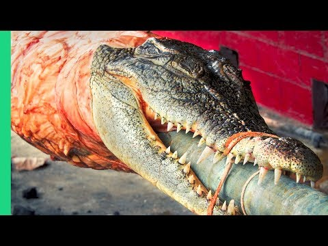 Crocodile Lechon - The most OUTRAGEOUS food in the Philippines!