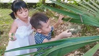 TUẤN MINH & THẢO NGUYÊN DẠO CHƠI TÌM THẤY TỔ CHỨNG CHIM