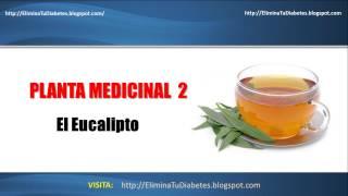 Plantas Medicinales Para La Diabetes: Aqui Tienes Unos Remedio Casero Para La Diabetes