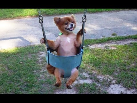 """Dogs Love Swings Compilation"" 