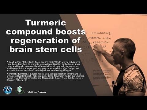 Turmeric compound boosts regeneration of brain stem cells