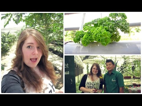 HYDROPONICS IN BAHRAIN !!! (Daily Vlog 296)