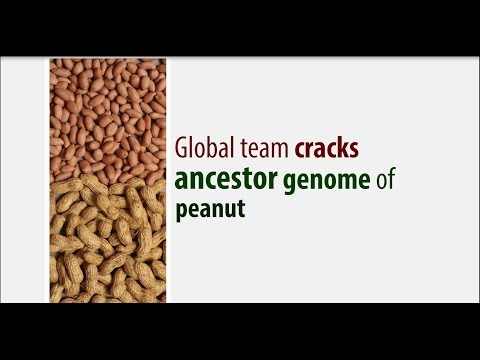 Decoding genome sequence of ancestor of peanut