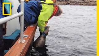 Watch: Rescuers Free Seal Trapped By Fishing Line | National Geographic