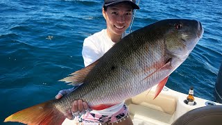 MONSTER MUTTON SNAPPER Caught by my WIFE! 我老婆釣到巨大雙色笛鯛!