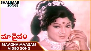 Maa Daivam Movie || Maagha Maasam Video Song || NTR, Jayachitra || Shalimar Songs