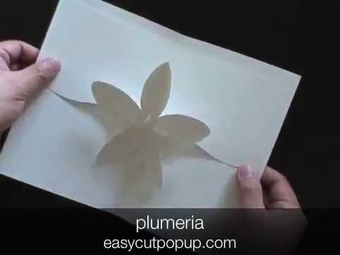 PLUMERIA- Kirigami Pop-up Card
