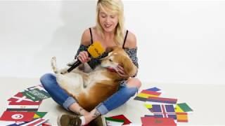 WM Orakel mit VOL.AT Hund Cookie - Tunesien vs. England