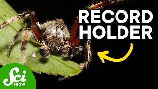 8 Awe-Inspiring Spiders
