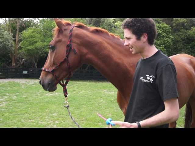 Funny Horse Party Tricks!