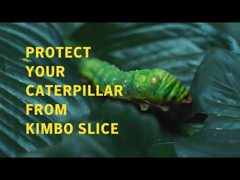 Caterpillar vs Kimbo