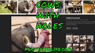 Cows with Holes, AKA Cannulated Cow Review