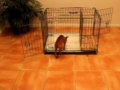 Dog Crate Training Housebreaking