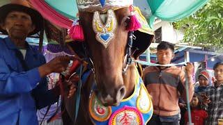 Kuda Renggong Sunatan Heboh - Horses can dance