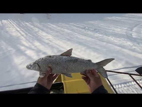 Рыбалка в Эвенкии.Супер клёв СИГА! (3..