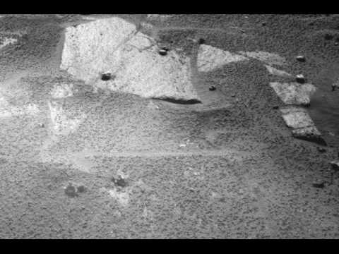 Arachnid Species etc on Martian Ancient Aquatic City?