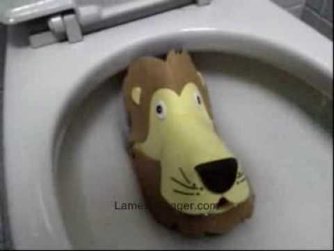 Lion drown in toilet