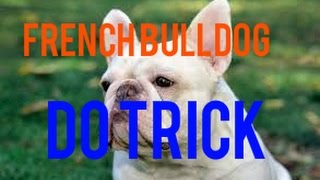 French Bulldog doing many tricks - AWESOME ? Best Animal Videos 2014